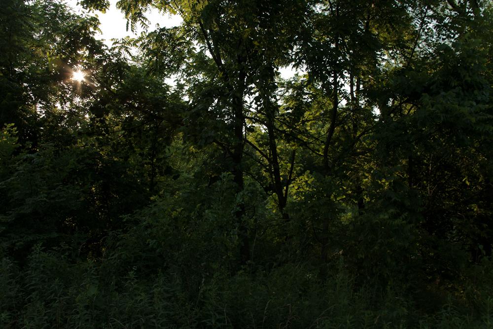 [June, 2012; Prairie Oaks Metro Park, OH]