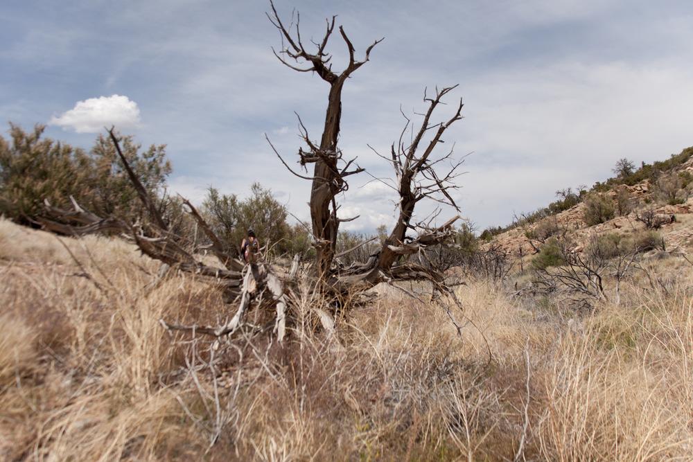 Erin/Tree [June, 2012; Abiquiu Lake, NM]
