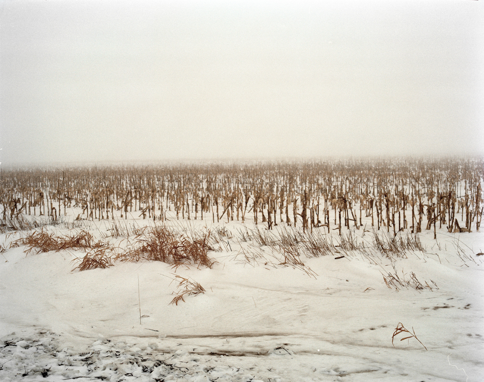 Corn    [from   Expanse ;  Winter, 2008; Brookings, SD]