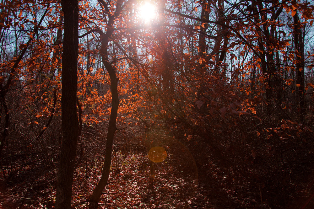 Dramatic Ohio Sun/Forest [from the recent archives; December, 2011; Blacklick Woods Metro Park, OH]