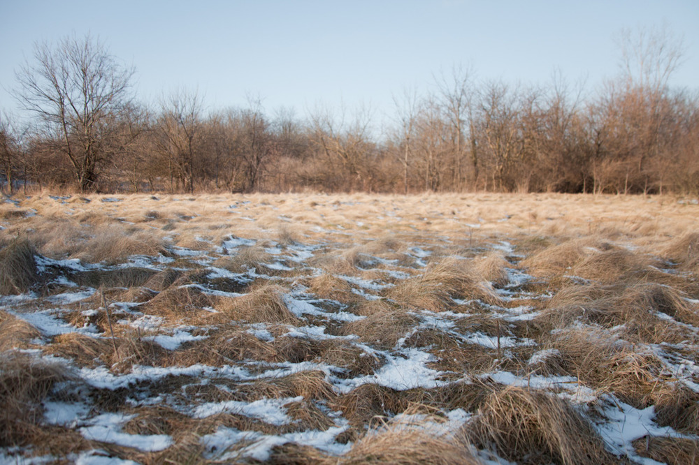 a perfect small field   [from the very recent archives; January, 2012; Prairie Oaks Metro Park, OH]