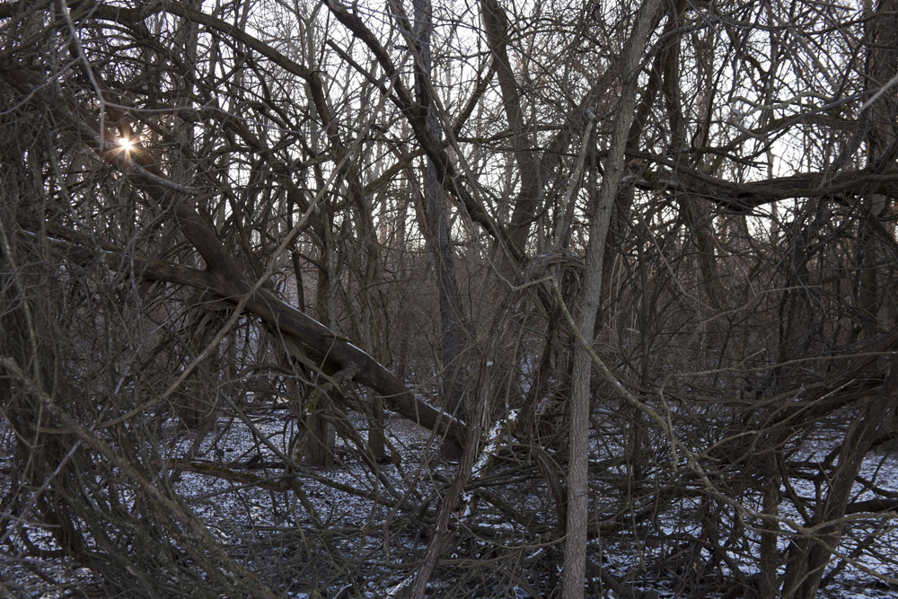 Image from my newest project (which will be added to my website shortly) [January, 2012;  Prairie Oaks Metro Park, OH]