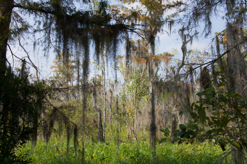 The Swamp (it was unbelievable) [September, 2011;  Jean Lafitte National Park and Preserve, LA]