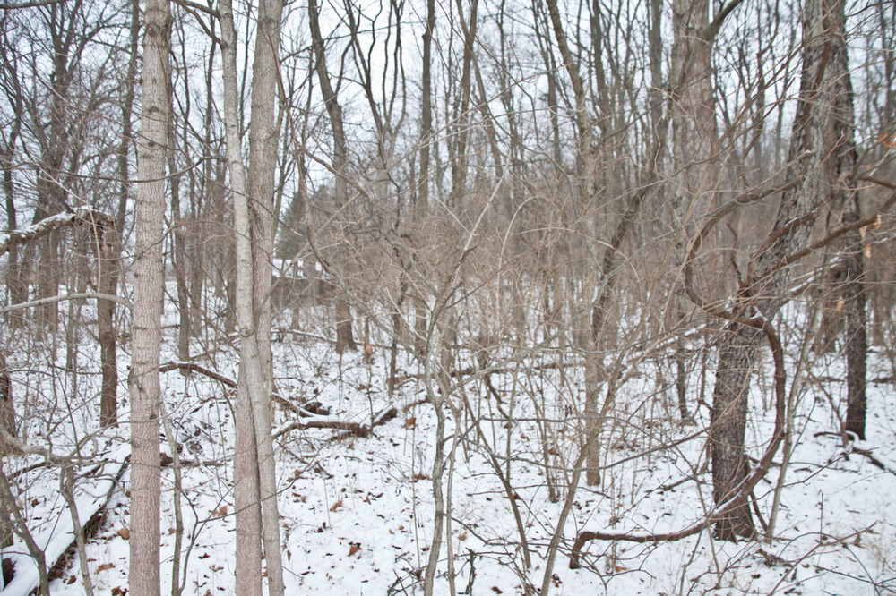 Outtake from my newest project [January, 2012;  Highbanks Metro Park, OH]