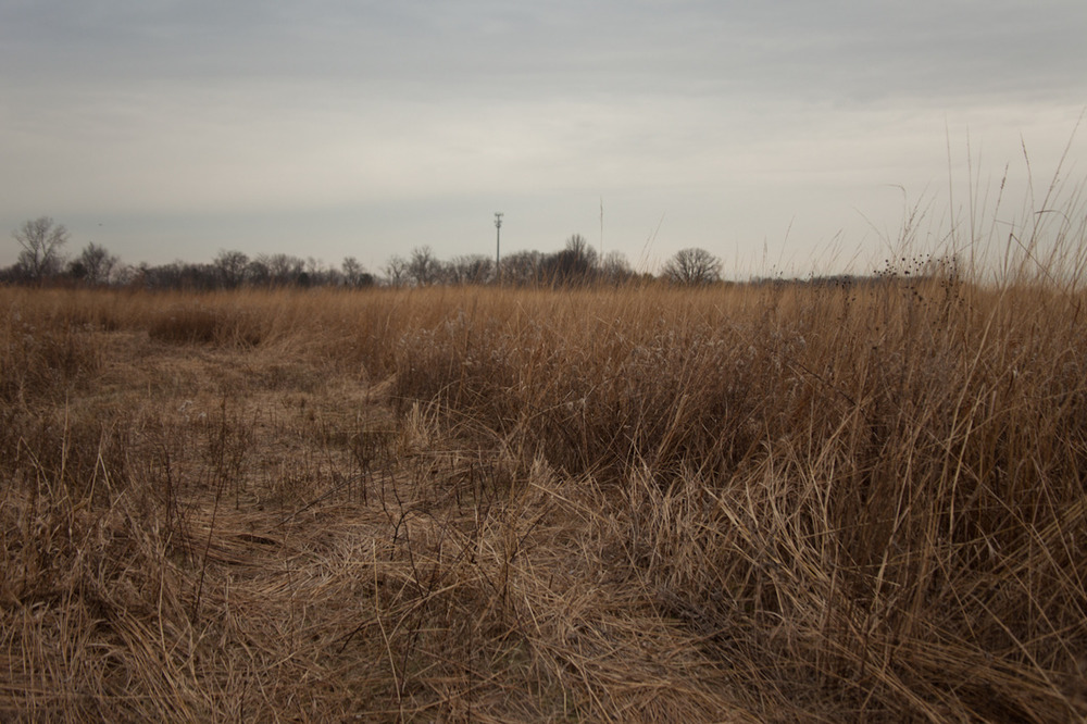 Image from my newest project [December, 2011;  Pickerington Ponds Metro Park, OH]