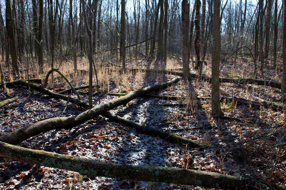 Outtake from my newest project [December, 2011;  Blacklick Woods Metro Park, OH]