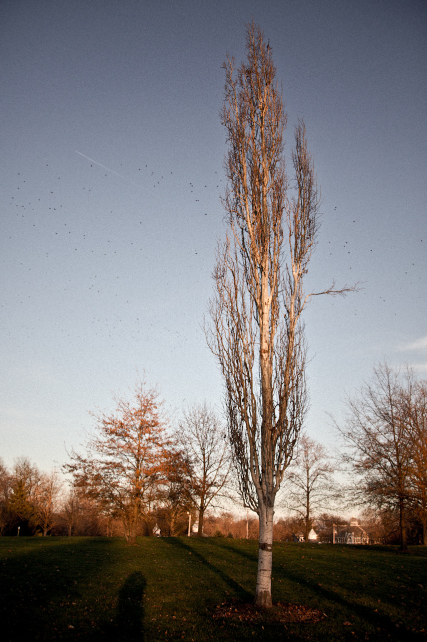 outtake from my new project [November, 2011; Franklin Park, Columbus, OH]