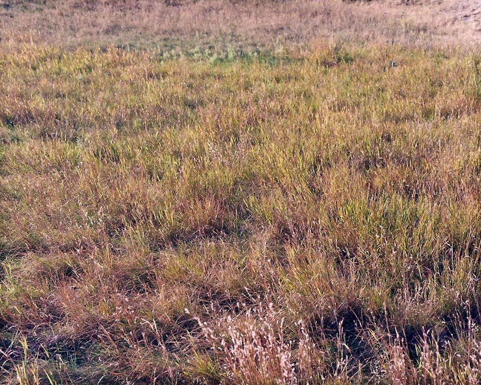 Field [October, 2011; Badlands National Park, South Dakota]