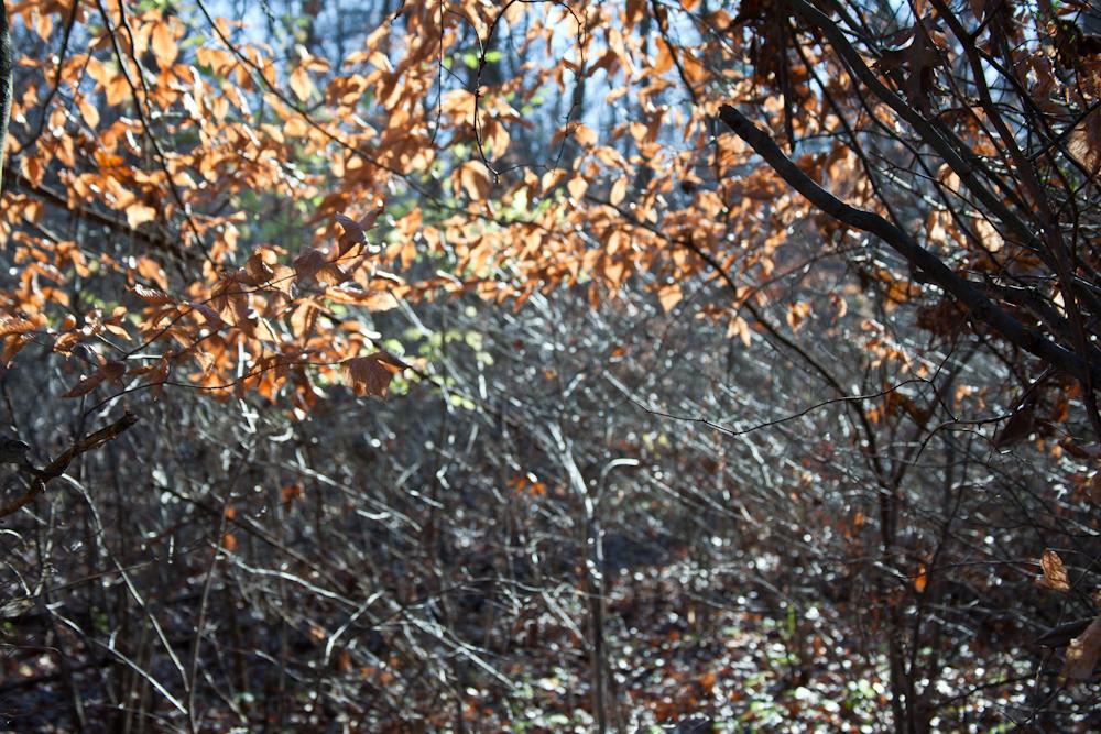 Blacklick Woods Metro Park, Ohio