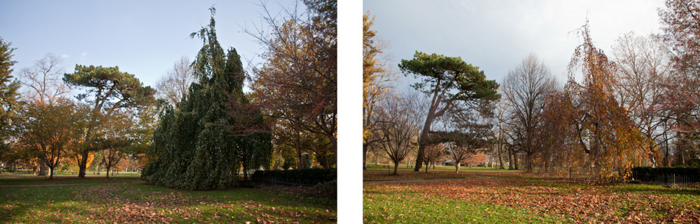 These were taken ten days apart. Fall's a funny and fast thing, isn't it?   Columbus, OH