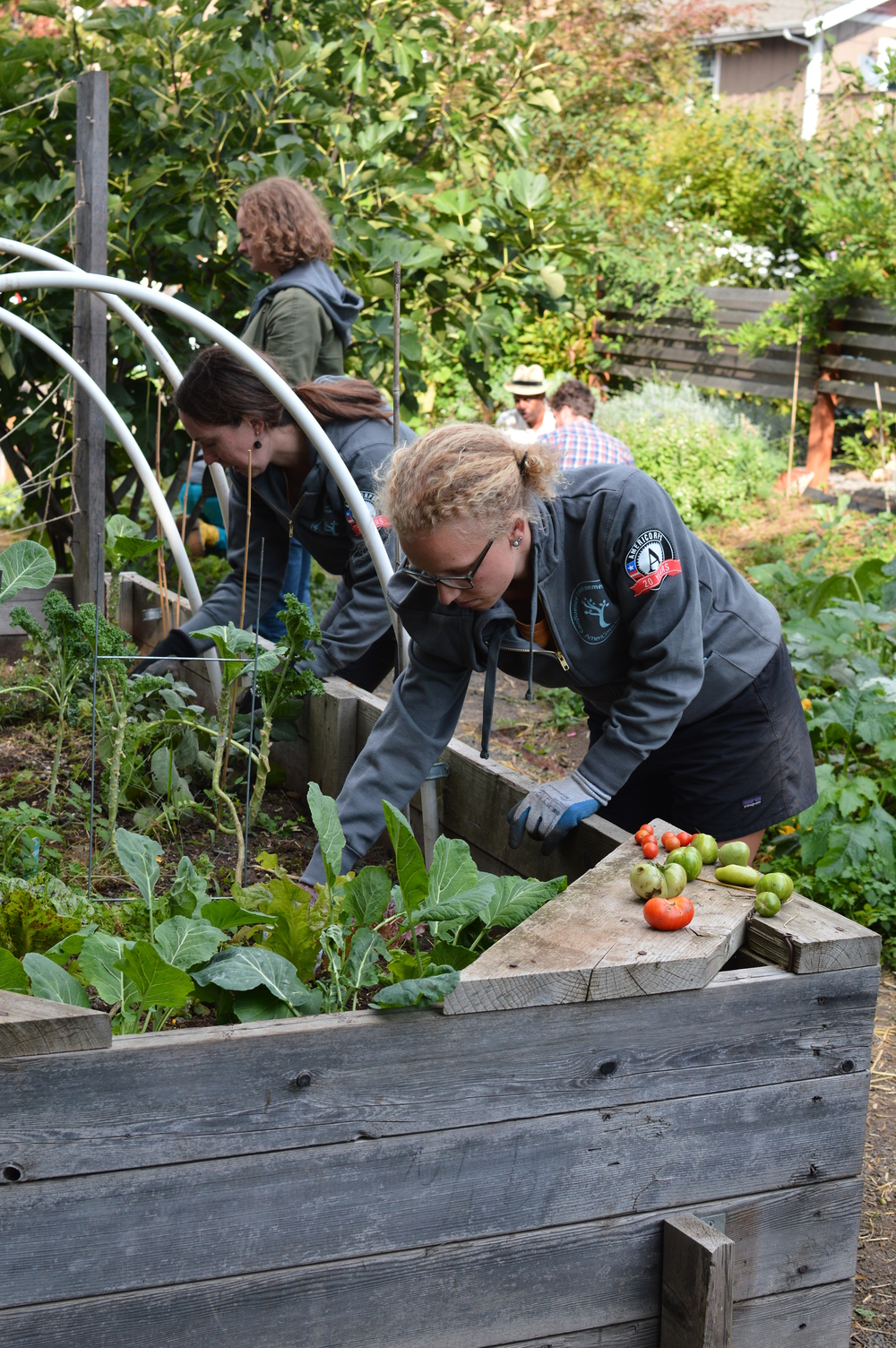 Weeding at Groundwork's Emerson Street Garden after a tour and history overview during a team meeting