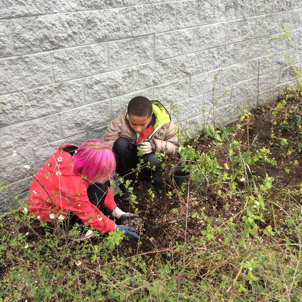 Trillium students planting along N Interstate Avenue