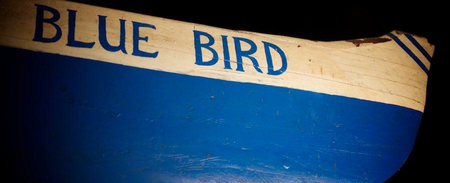 Bluebird - 986.16