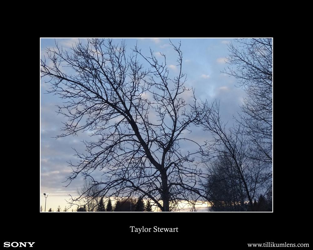 Taylor Stewart.jpg