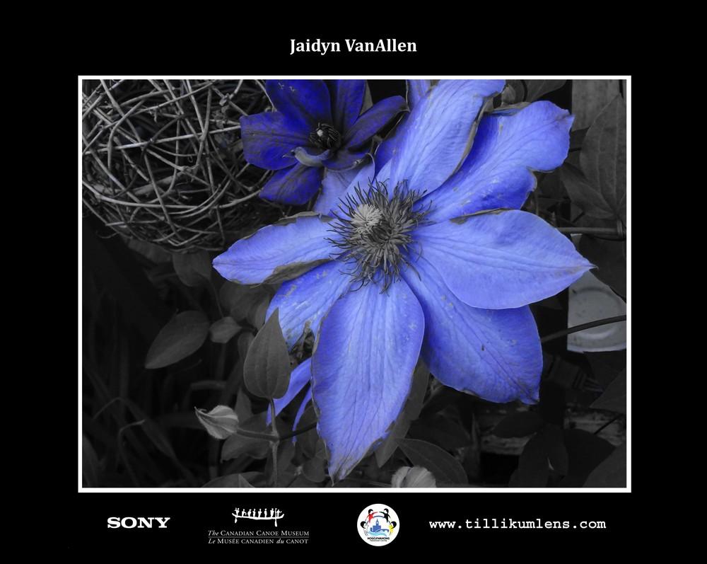 Jaidyn VanAllen 2 Logo Centered.jpg