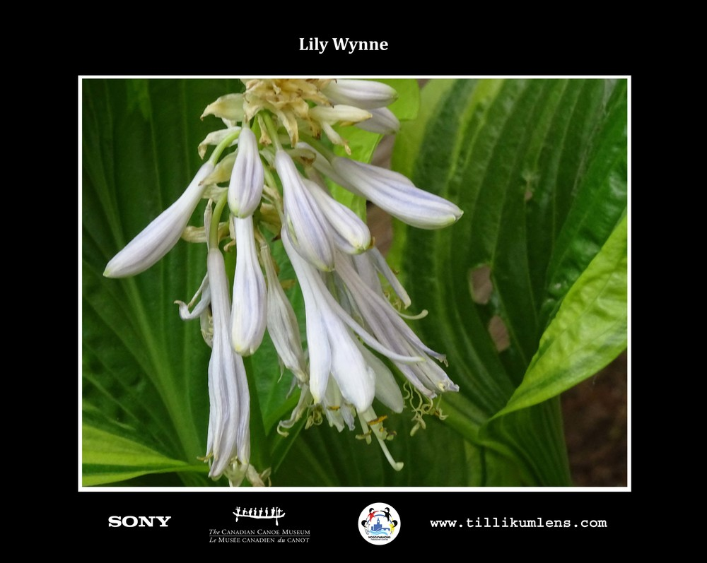 Lily Wynne 1 Logo Centered.jpg
