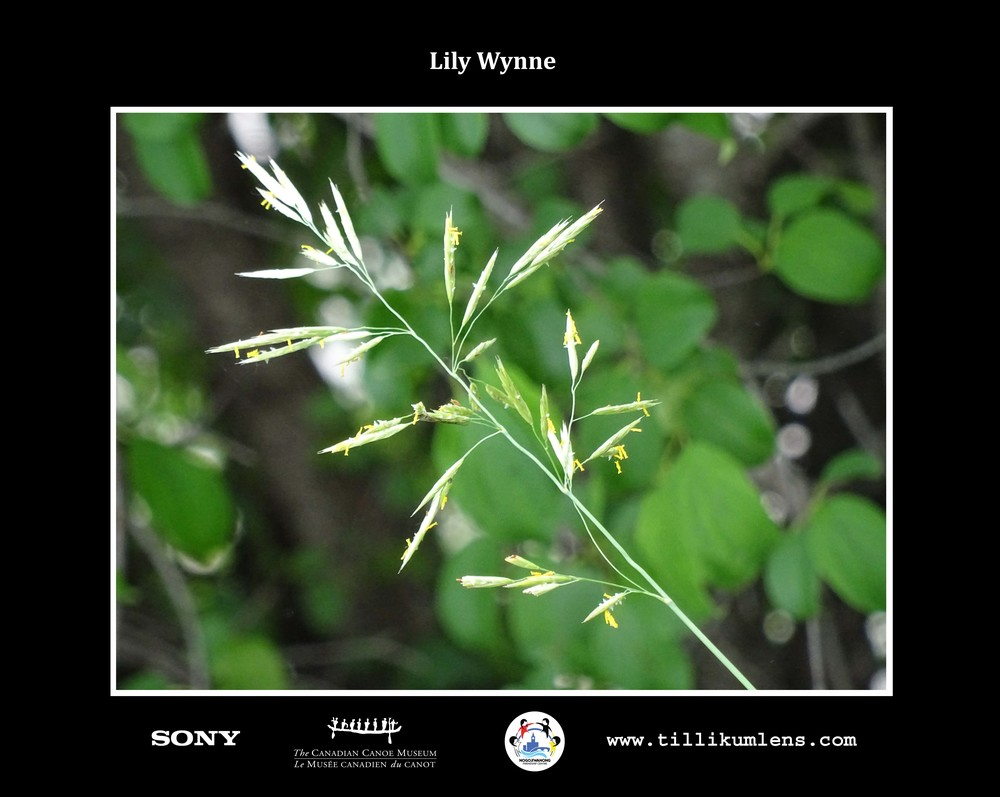 Lily Wynne 2 Logo Centered.jpg