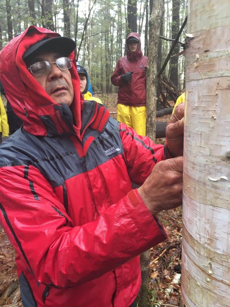 Chuck Commanda peels birch bark off of a tree