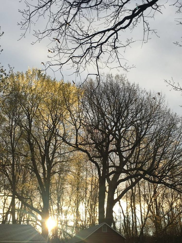 sunshine coming through bare trees