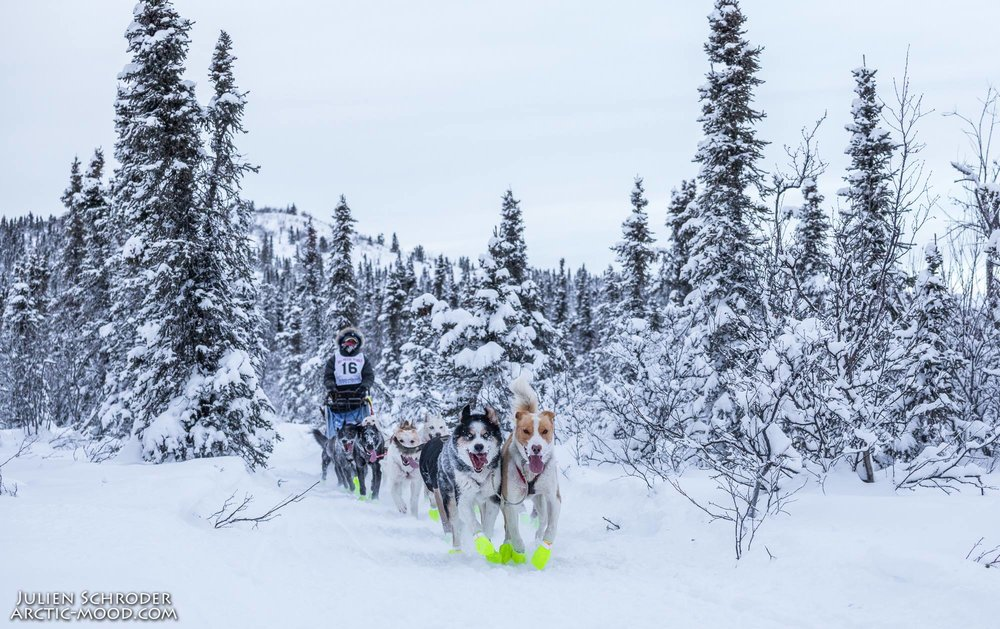 Mushing @ Smokin' Ace - Amanda has been with Smokin' Ace Kennel for 3 years now.  She has raced a handful of mid-distance races between 50-200 miles.  Brooks mainly works training the puppies ages 1-3.  Once they graduate from her puppy school, they join the big guns on Halls' team and go for the gold! Brooks' loves working with the younger dogs, shaping them into well trained athletes is her passion.  She loves learning each dogs unique personalities and figuring out what makes each dog tick.