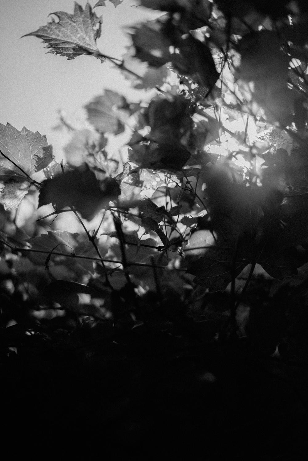 LAURA_ANDY_FL-1.jpg