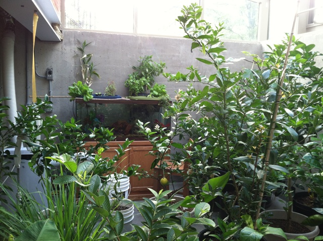 chun-pit-greenhouse-001-9-30-2013-1.jpg