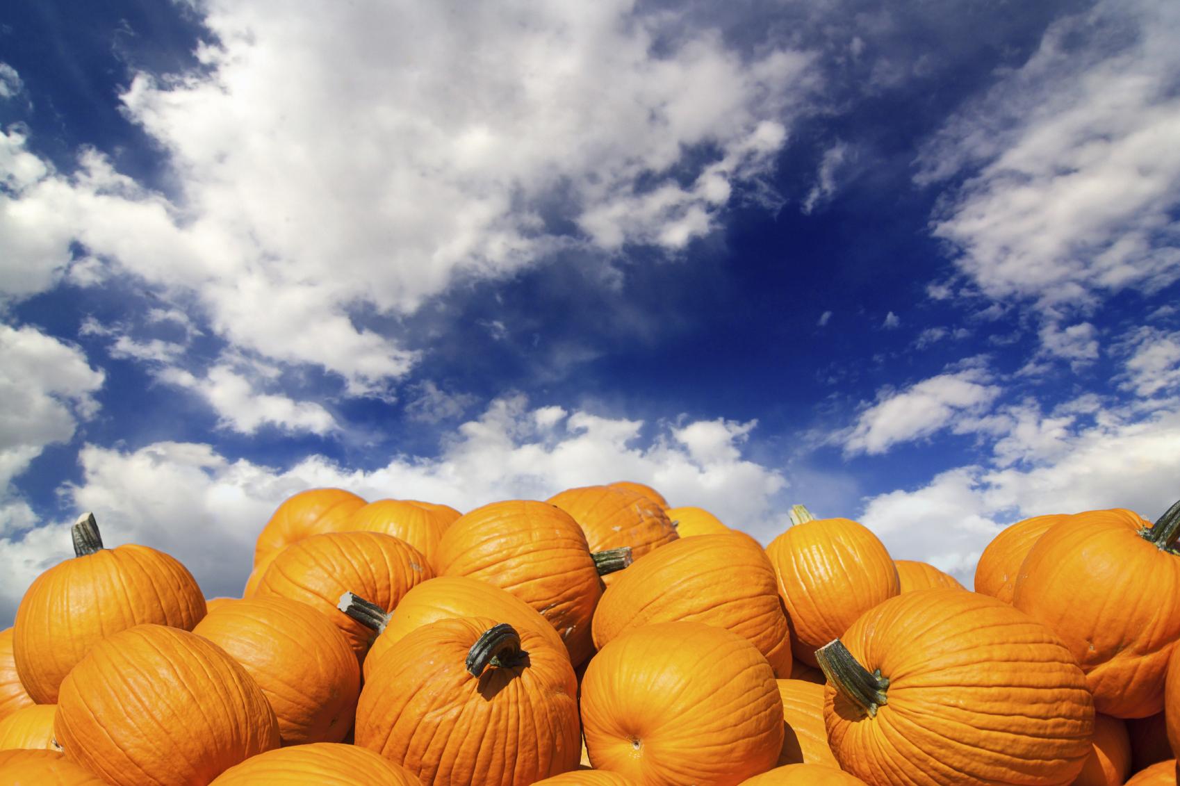 fall_blogpost