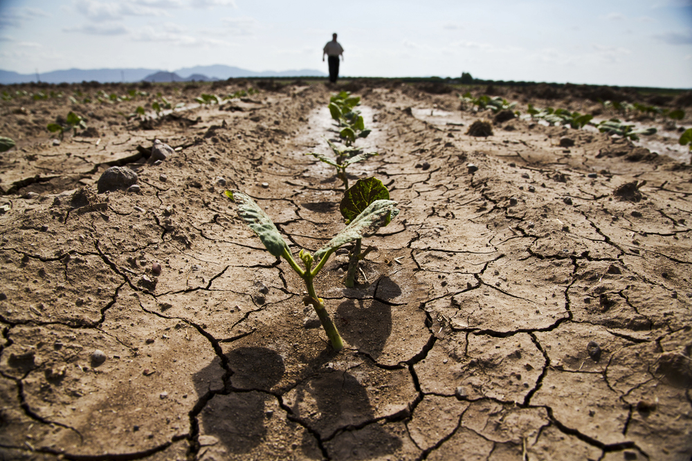 The drought in California  cost 17,000 seasonal and part-time jobs in 2014 alone.