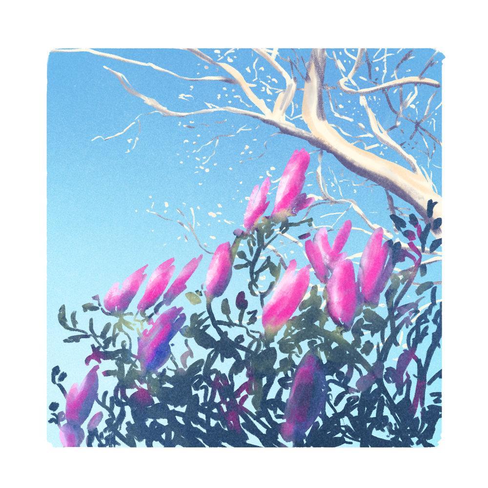 Warmup-pink-plant.jpg