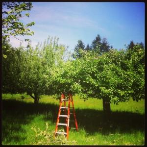25 - orchard.jpg