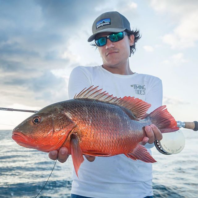 Mangrove snappers out on the reef, they get way bigger and vibrant in their colors. #flyfishing #costarica #snapper #fishing #nature #saltwaterflyfishing #saltlife