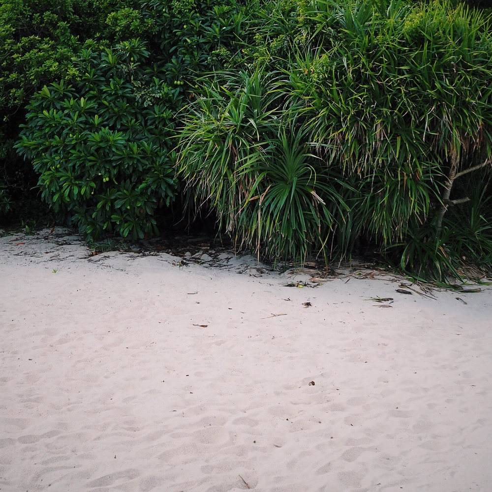 beach and bush