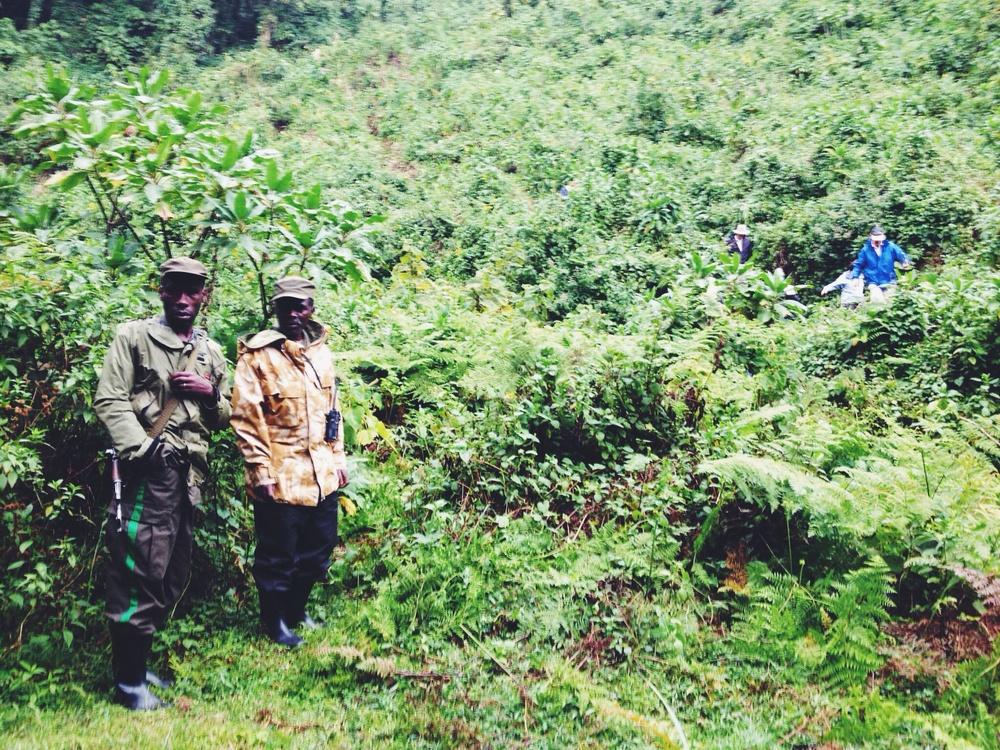 Virunga national park guide and tracker.
