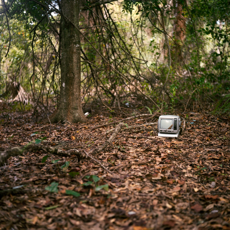 Nature and Technology, Fort Pierce, FL 2013