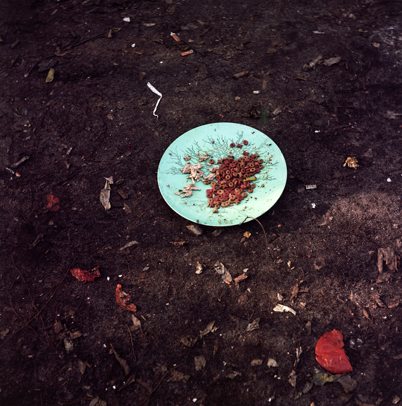Cat Dish, Tomato Skin, Straw Wrapper, Cocoa, FL 2013