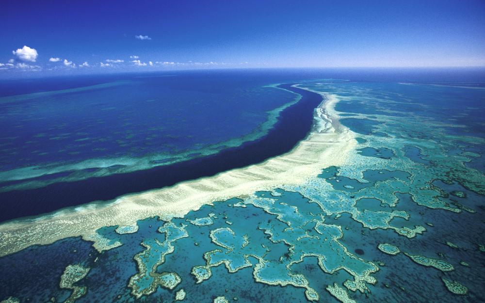 great-barrier-reef-hardybis.jpg