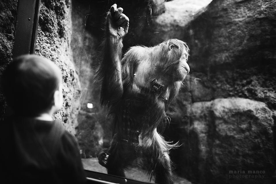 Cleveland Zoo 7