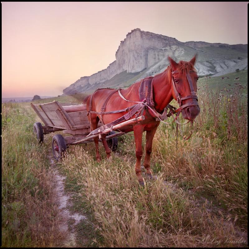 Красная лошадь стояла под дождем в поле и постепенно становилась белой. В телевизоре у Арама дождь продолжал литься, переливаясь под концертными прожекторами в разные цвета, объединяя всех в единое целое,стирая грань между сценой и публикой.(фото Олега Ванилара)