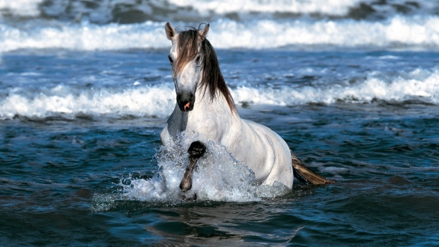 На рассвете из моря выскочил белый красавец конь и трижды облетел землю. Когда он стал валяться в песке, младший сын вскочил на него и, как змея, прильнул к его шее.