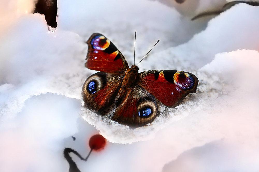 """""""Тут, в этой комнате, вон на этом столе, сын расправлял свою поимку, пробивал мохнатую спинку черной булавкой, втыкал бабочку в пробковую щель меж раздвижных дощечек, распластывал, закреплял полосами бумаги еще свежие, мягкие крылья"""". фото s4.fotokto.ru"""
