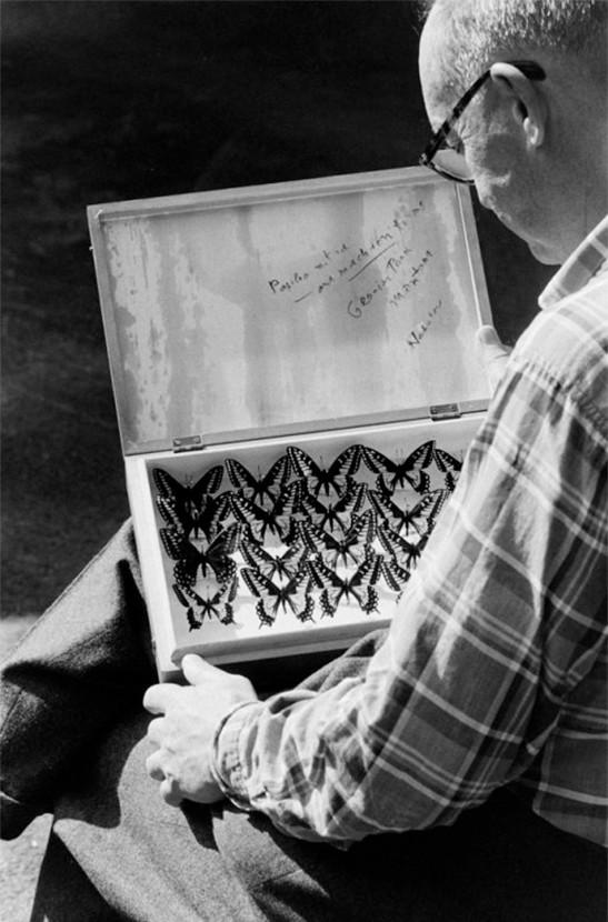 Владимир Набоков и его бабочки. Фотоspletnik.ru