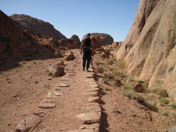 Синайские горы состоят преимущественно из гранитов, гнейсов, кристаллических сланцев. Большую часть горного региона занимает практически безводная и каменистая Синайская пустыня