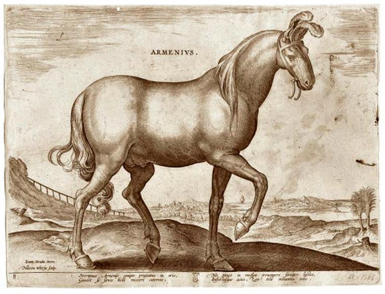 Армяне одними из первых приручили лошадей и начали их разводить. Армянская лошадь относится к одной из древнейших популяций лошадей, является горной породой.