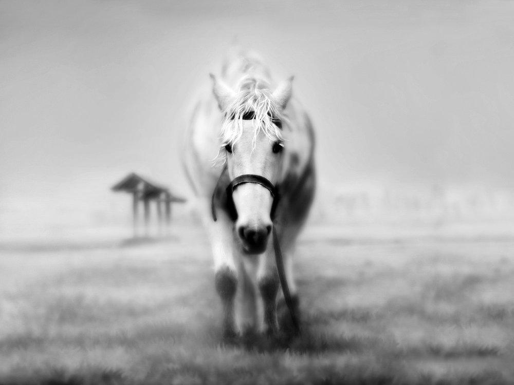 И вот я увидела белую лошадь наяву, но она казалась придуманной, нездешней, из чужого дурного сна. Фото look.com.u