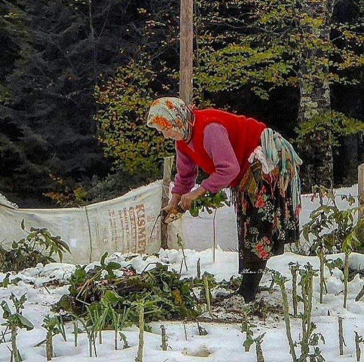 На побережье Черного моря в армянском Амшене зимы не суровы, но многоснежны