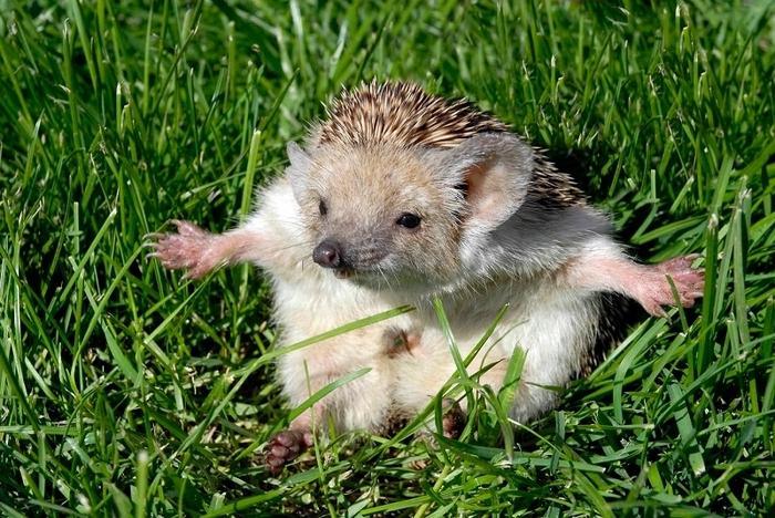 Фотоhttp://animalsfoto.com