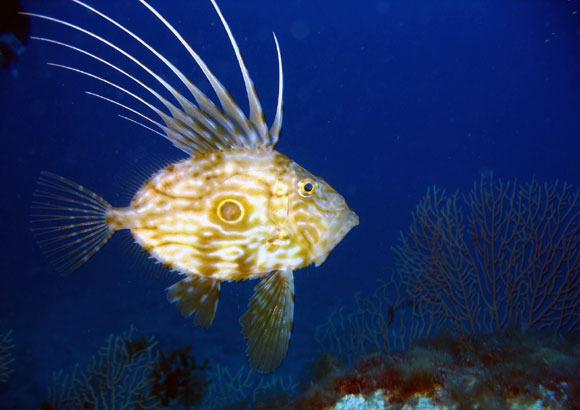 Солнечник-рыба. Фотоimg.2oa.ru