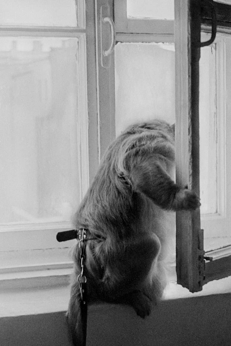 monkey78.jpg