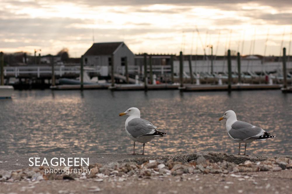 seagullssunsetseagreen