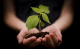 handsholdingplant.jpg